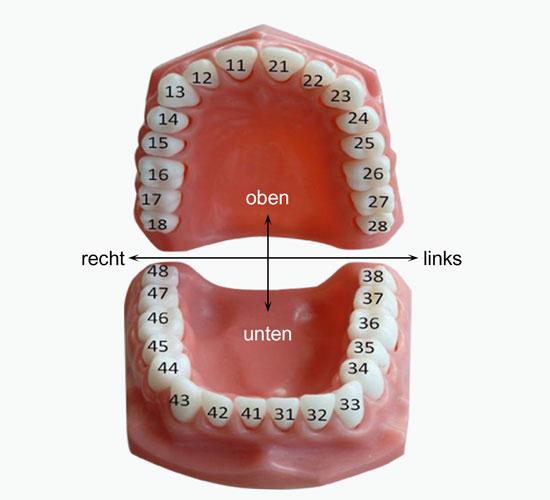 Bild der Zähne